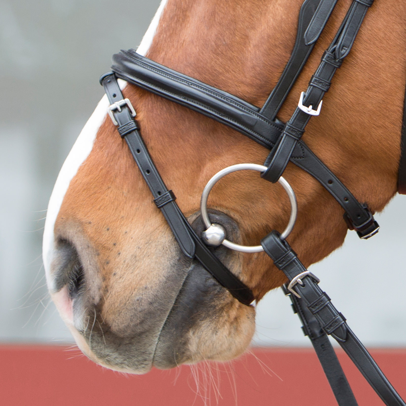 Learn horse riding online